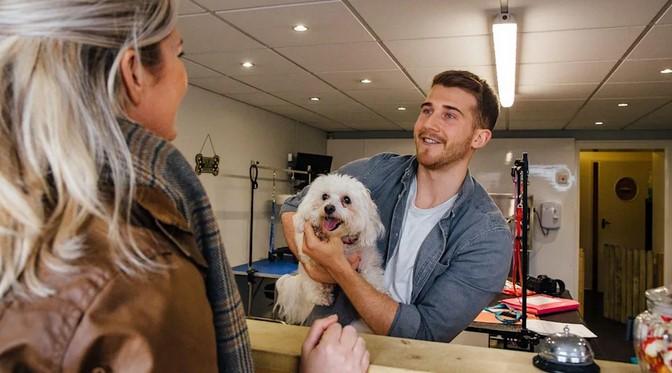 nhân viên chăm sóc thú cưng, nghề dễ ly hôn ở Mỹ